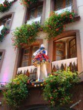 Цветущий Эльзас (Фото Е.Крестьянцевой)